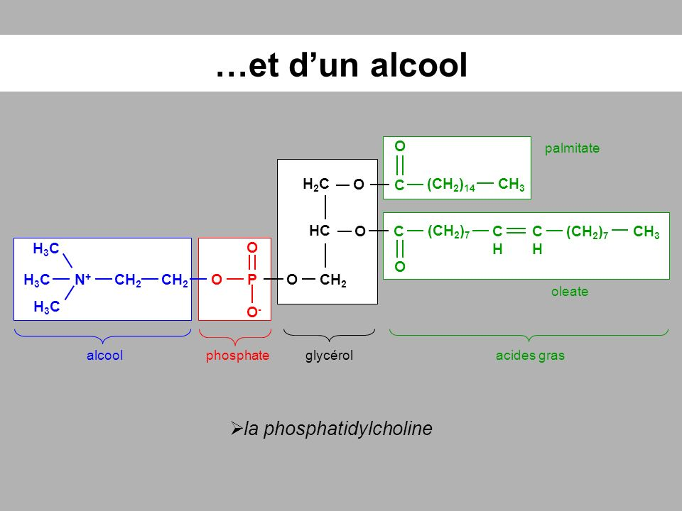 …et d'un alcool la phosphatidylcholine O H2C O C (CH2)14 CH3 HC O C