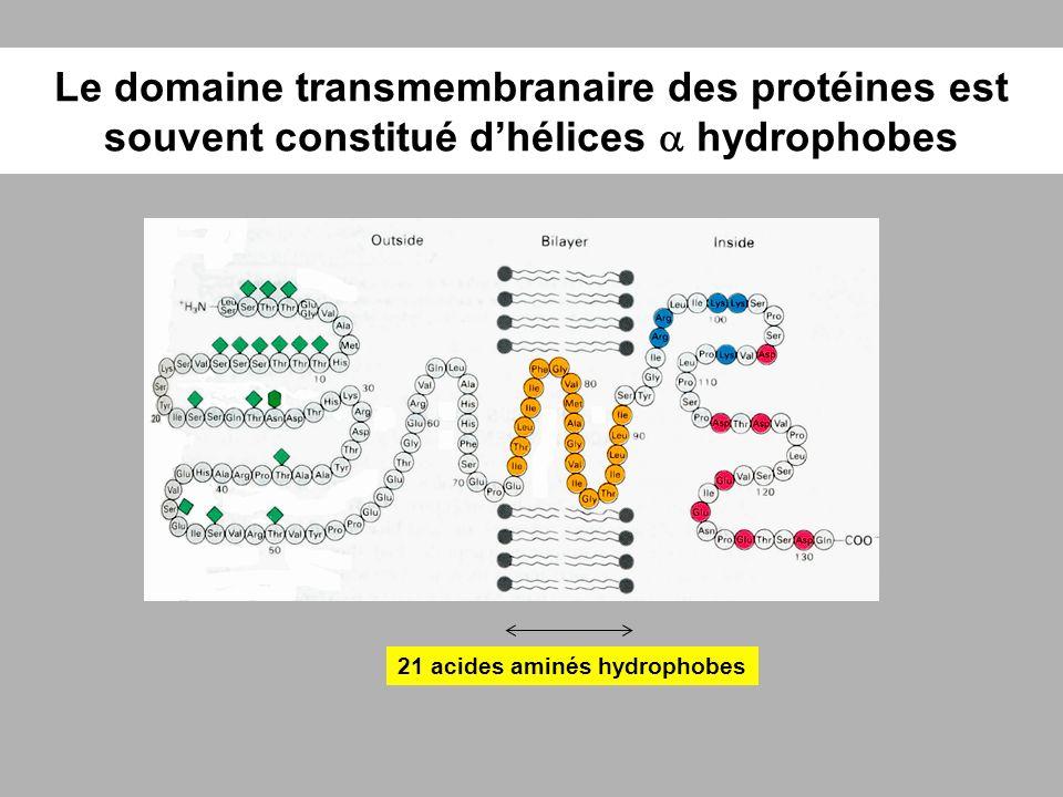Le domaine transmembranaire des protéines est souvent constitué d'hélices a hydrophobes