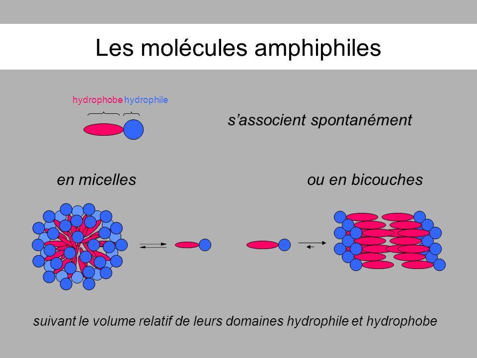 Les molécules amphiphiles