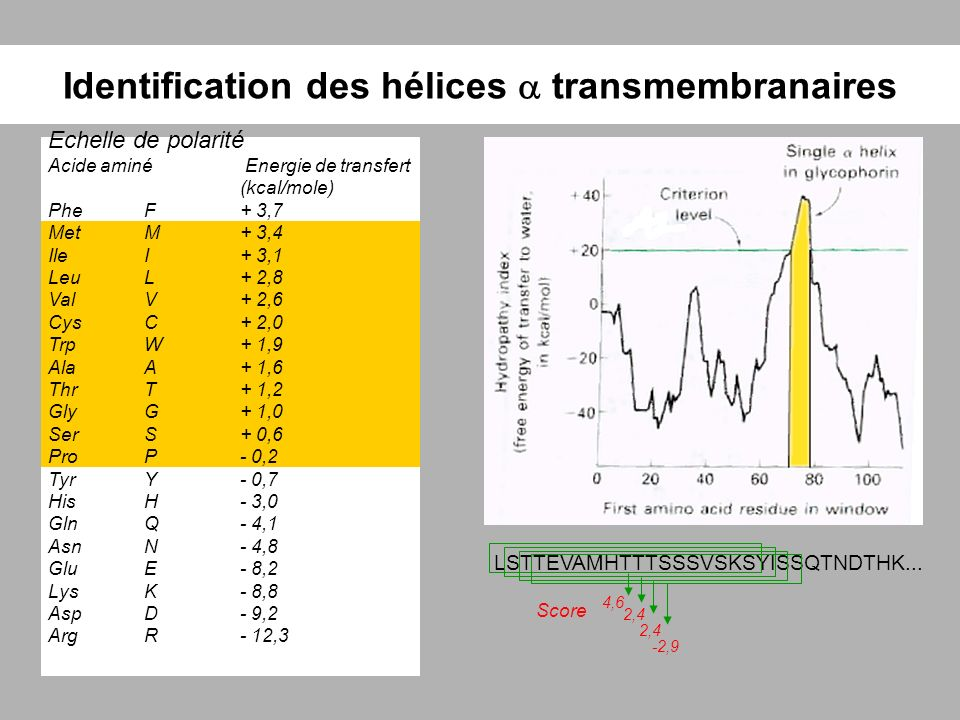 Identification des hélices  transmembranaires