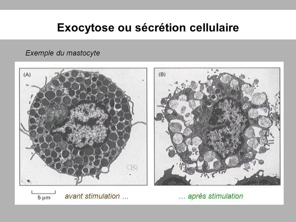 Exocytose ou sécrétion cellulaire