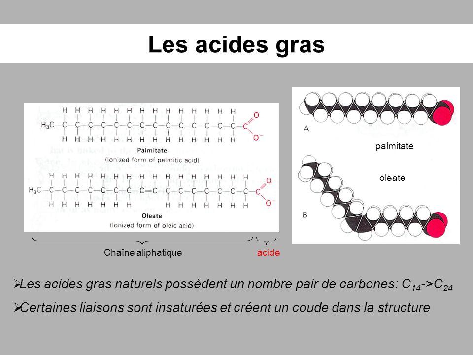 Les acides gras palmitate. oleate. Chaîne aliphatique. acide. Les acides gras naturels possèdent un nombre pair de carbones: C14->C24.