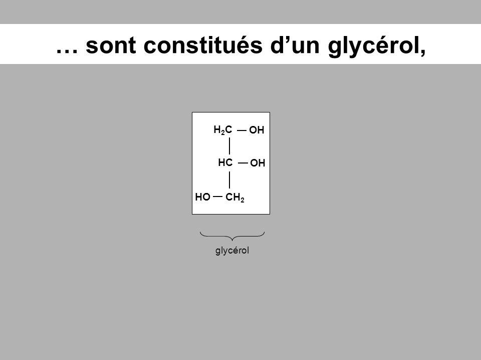 … sont constitués d'un glycérol,