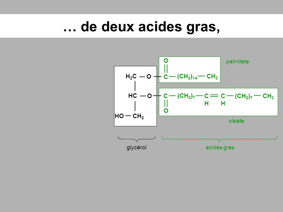 … de deux acides gras, O H2C O C (CH2)14 CH3 HC O C (CH2)7 CH CH