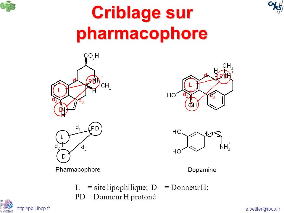 Criblage sur pharmacophore