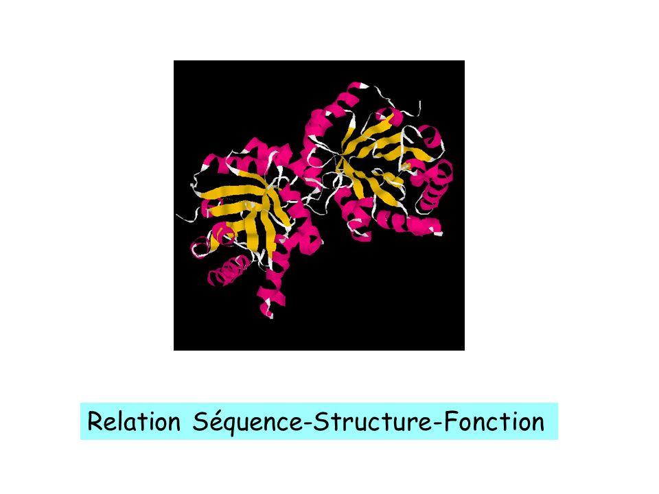 Relation Séquence-Structure-Fonction