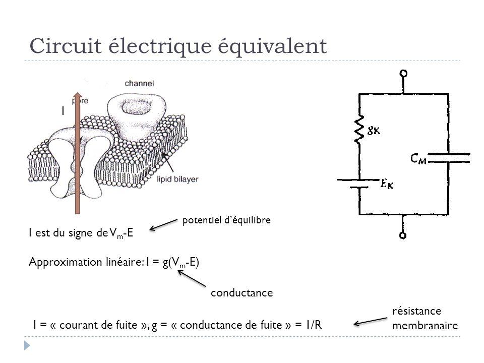 Circuit électrique équivalent