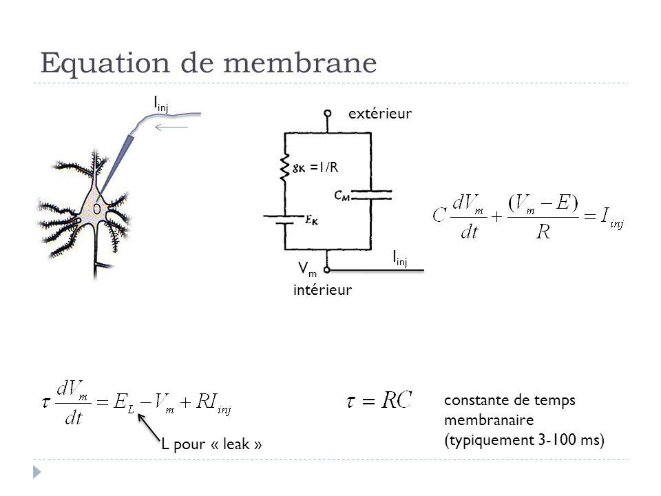 Equation de membrane Iinj extérieur Iinj Vm intérieur