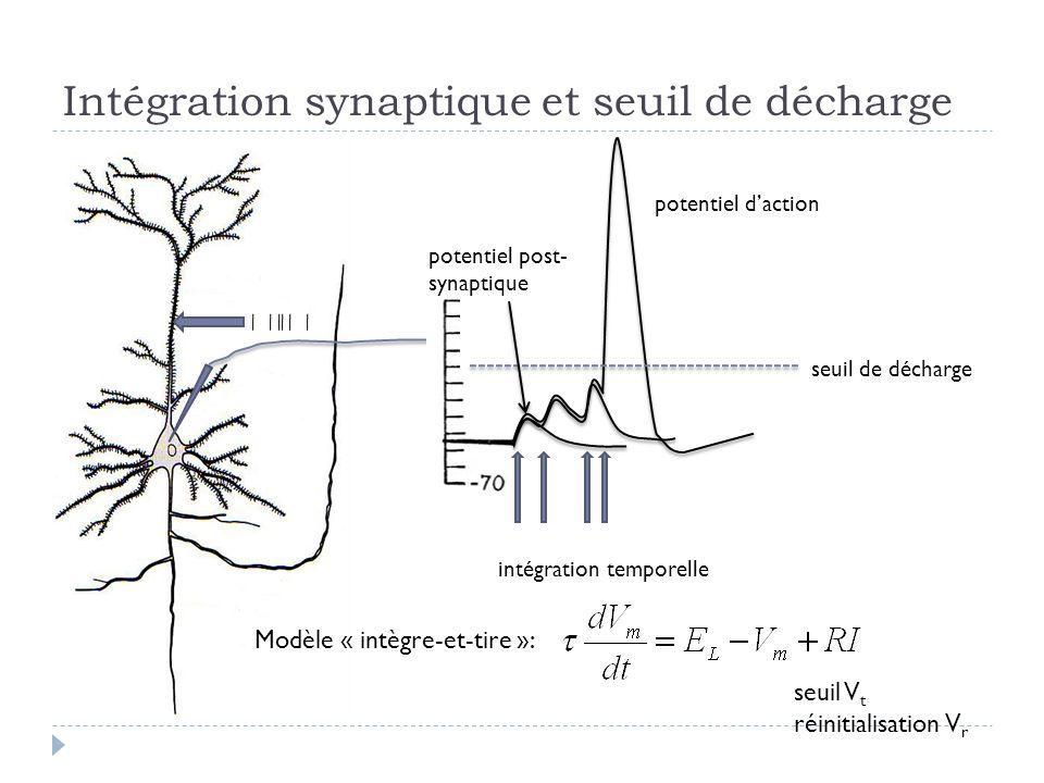 Intégration synaptique et seuil de décharge