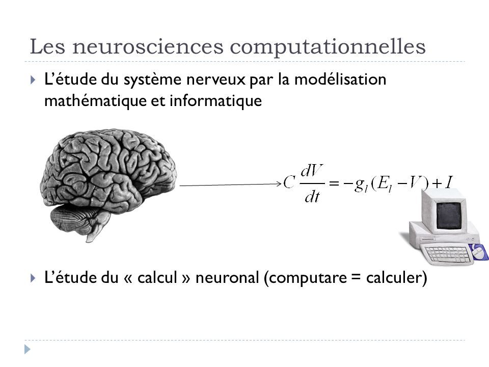 Les neurosciences computationnelles