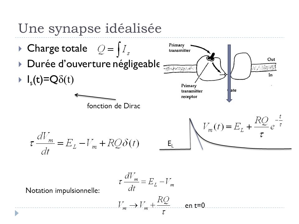 Une synapse idéalisée Charge totale Durée d'ouverture négligeable