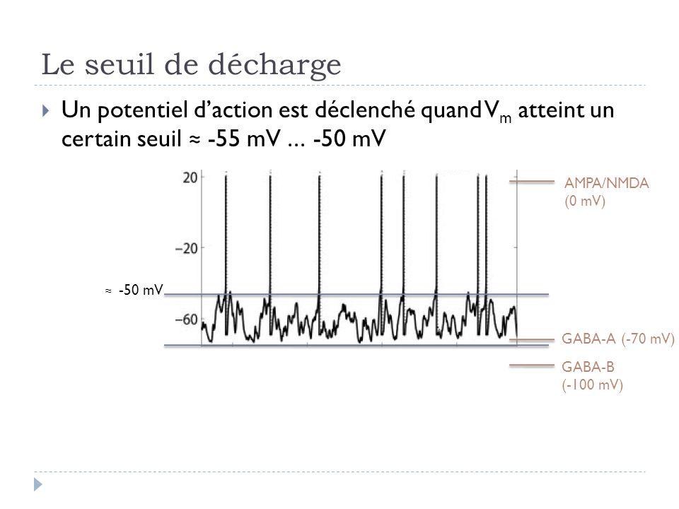 Le seuil de décharge Un potentiel d'action est déclenché quand Vm atteint un certain seuil ≈ -55 mV ... -50 mV.