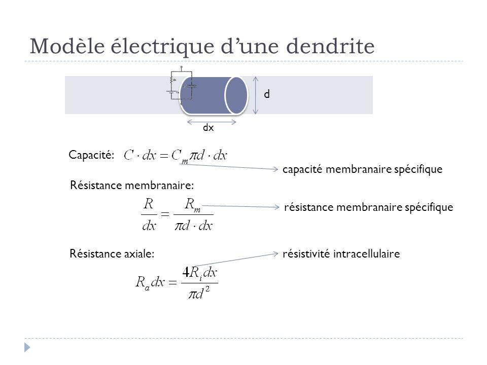 Modèle électrique d'une dendrite
