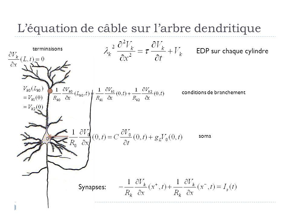 L'équation de câble sur l'arbre dendritique