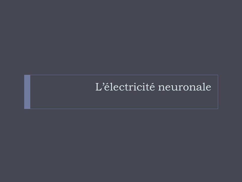 L'électricité neuronale