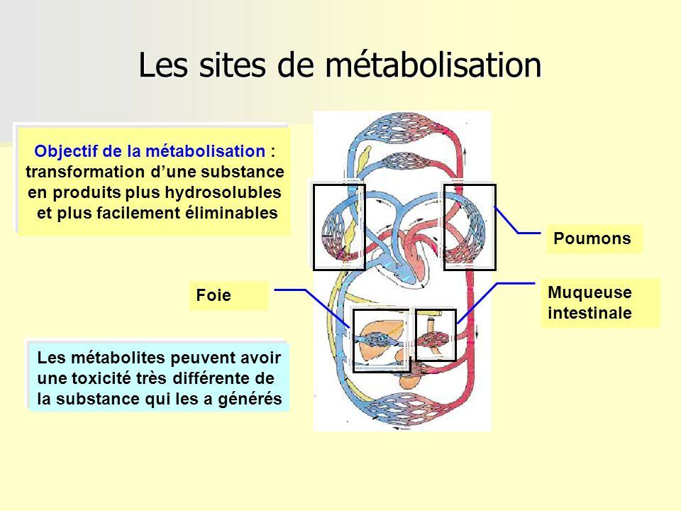 Les sites de métabolisation