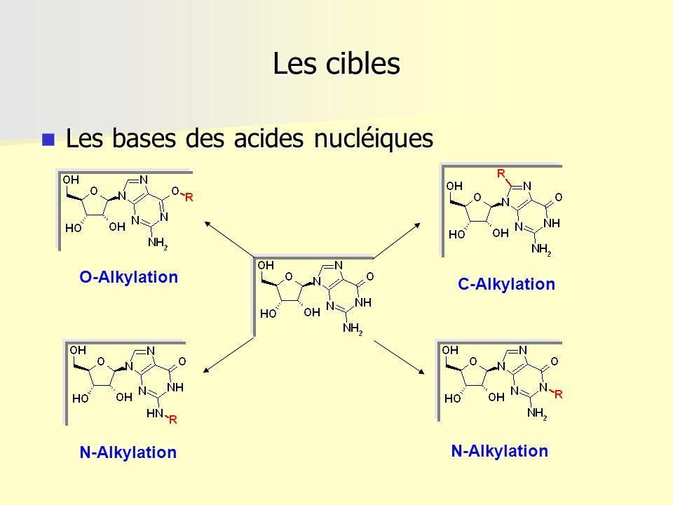 Les cibles Les bases des acides nucléiques O-Alkylation C-Alkylation