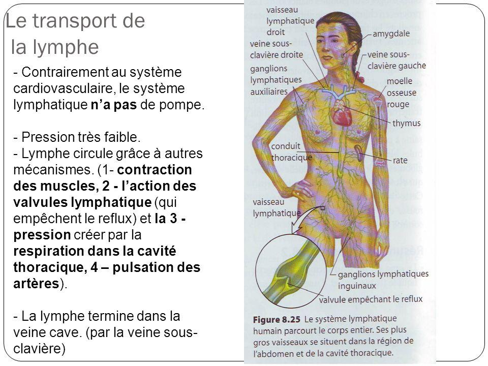 Le transport de la lymphe