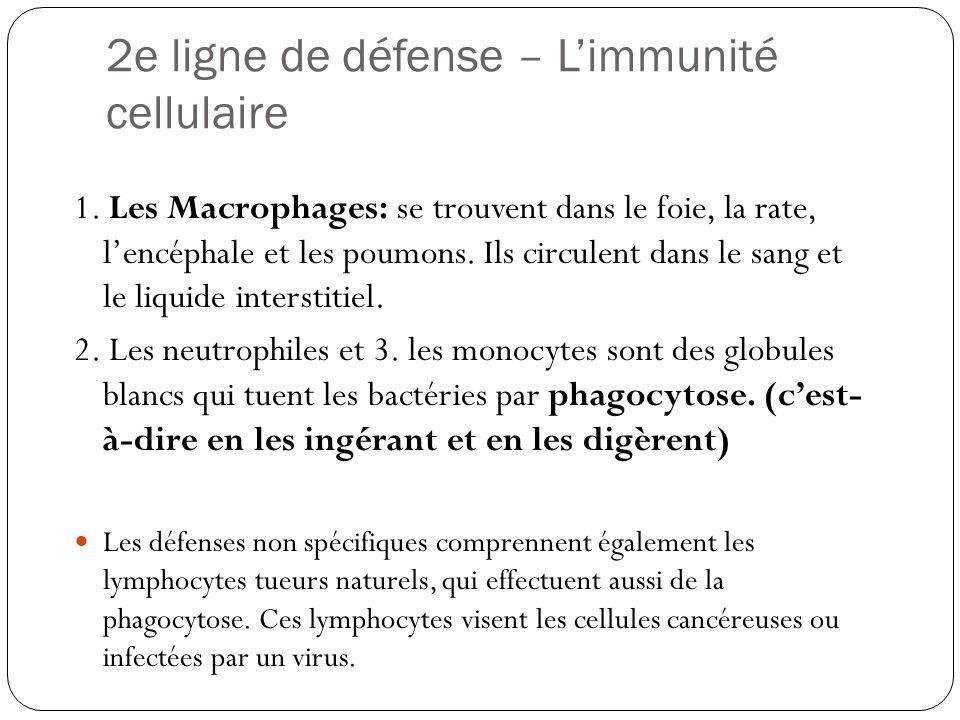 2e ligne de défense – L'immunité cellulaire