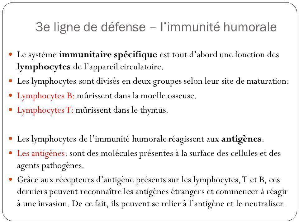 3e ligne de défense – l'immunité humorale