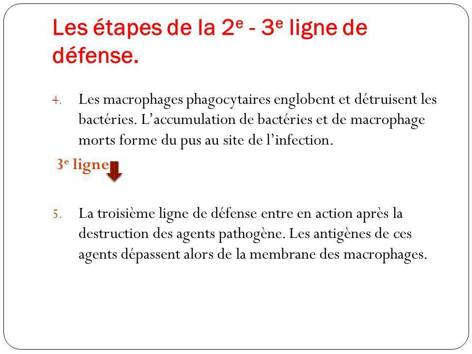 Les étapes de la 2e - 3e ligne de défense.