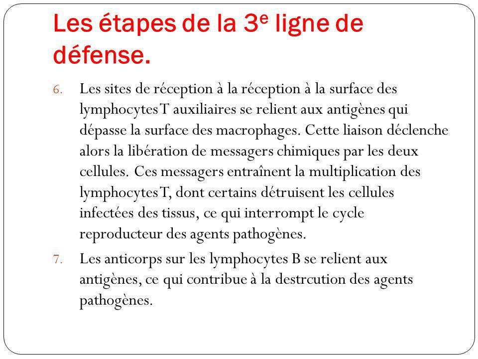 Les étapes de la 3e ligne de défense.