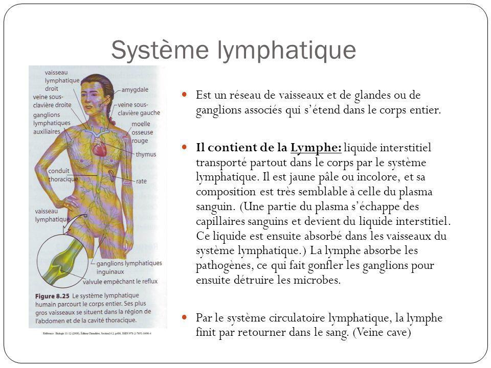 Système lymphatique Est un réseau de vaisseaux et de glandes ou de ganglions associés qui s'étend dans le corps entier.