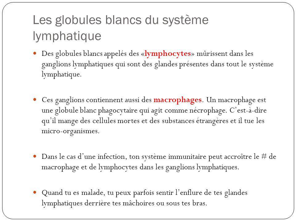 Les globules blancs du système lymphatique