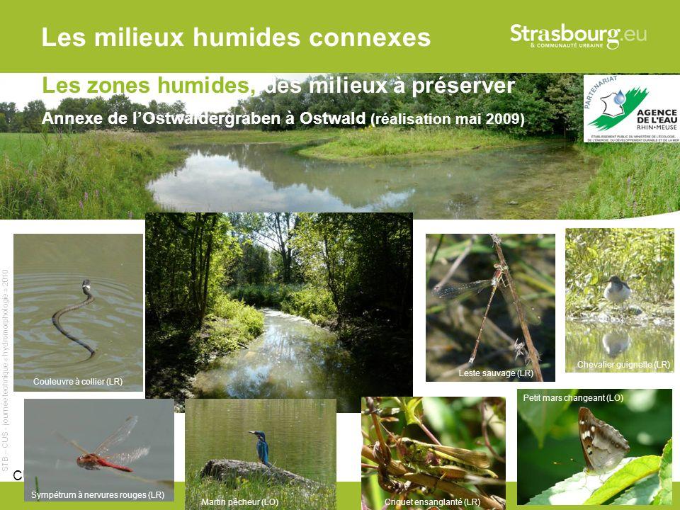 Les milieux humides connexes