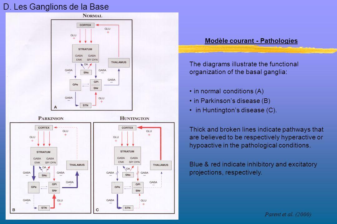 Modèle courant - Pathologies