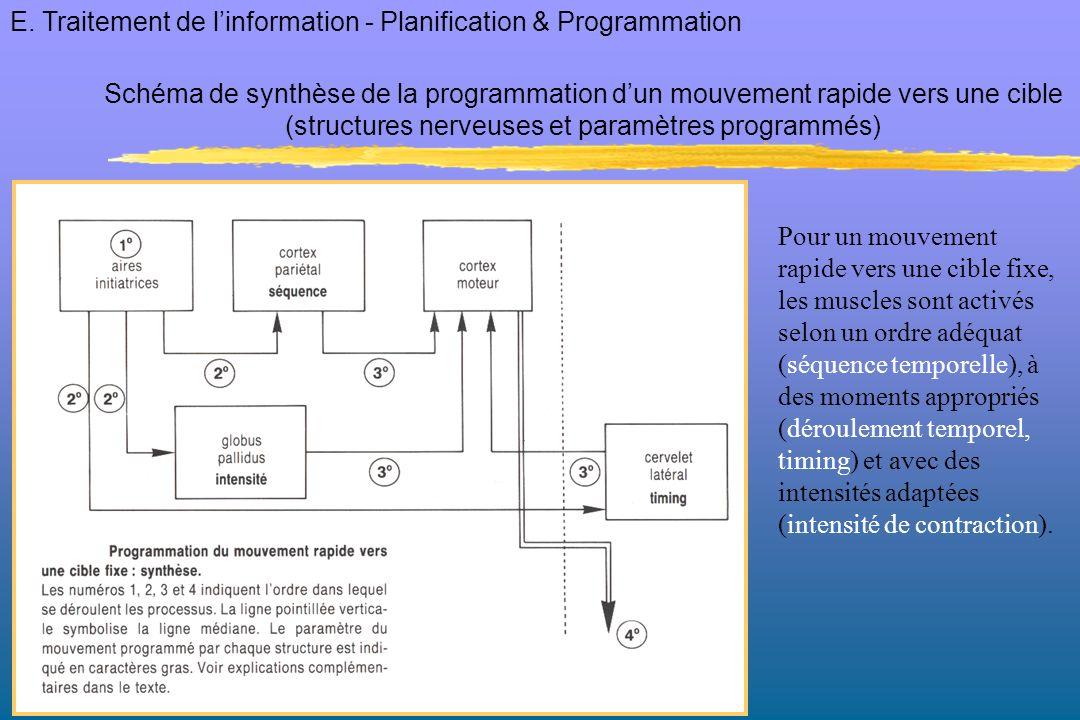 (structures nerveuses et paramètres programmés)