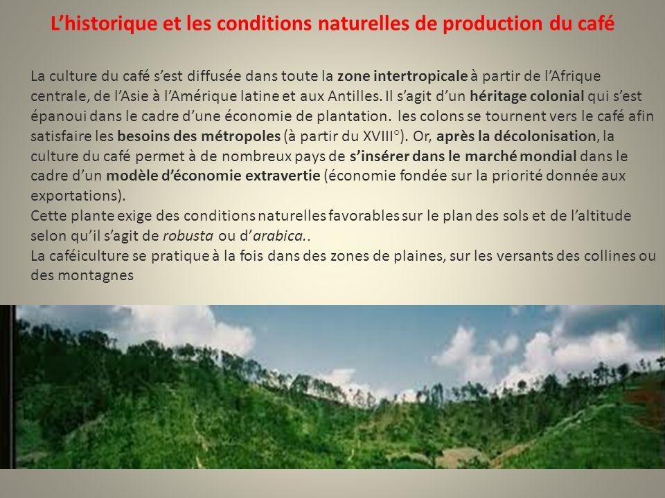 L'historique et les conditions naturelles de production du café