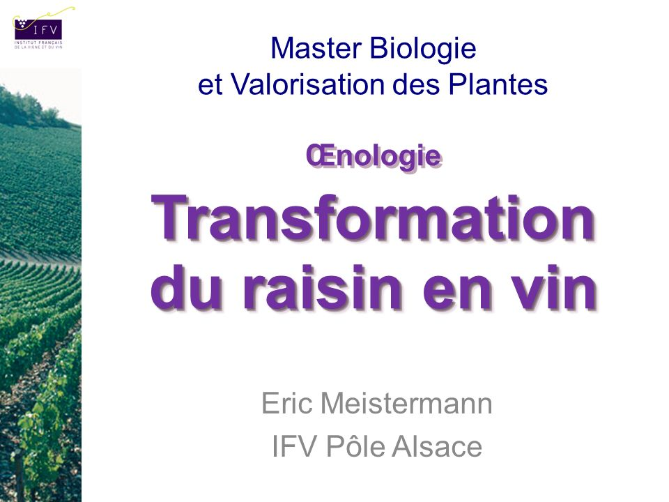 Œnologie Transformation du raisin en vin