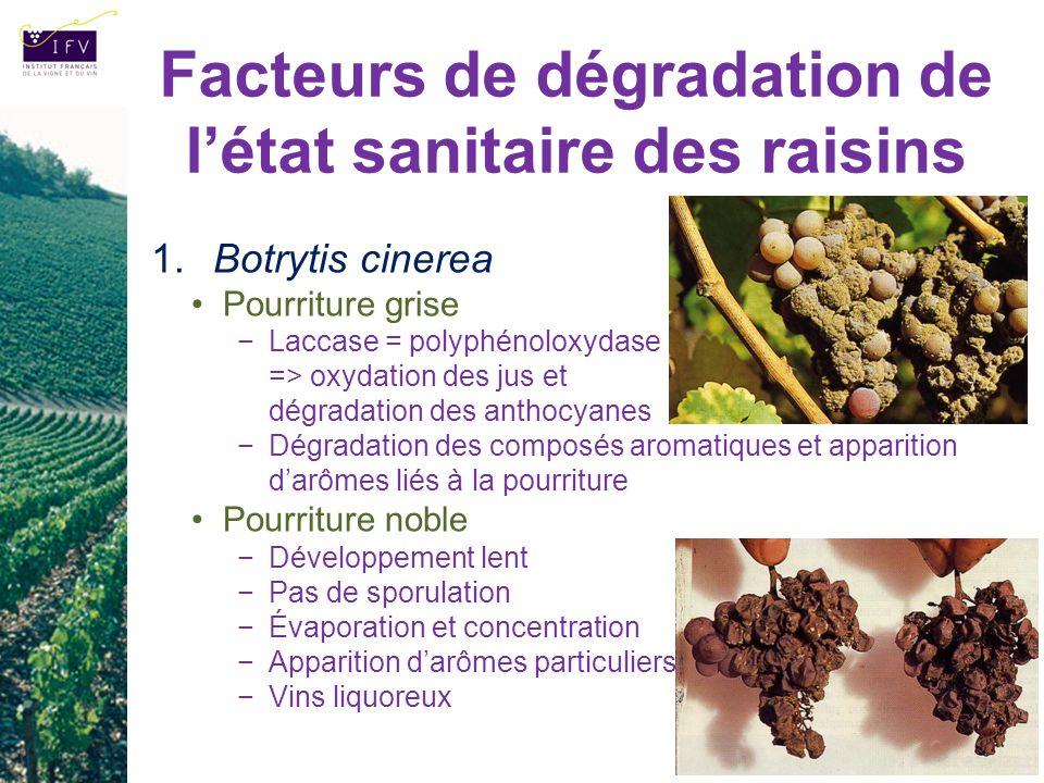 Facteurs de dégradation de l'état sanitaire des raisins