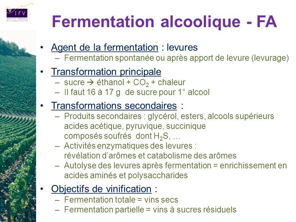 Fermentation alcoolique - FA