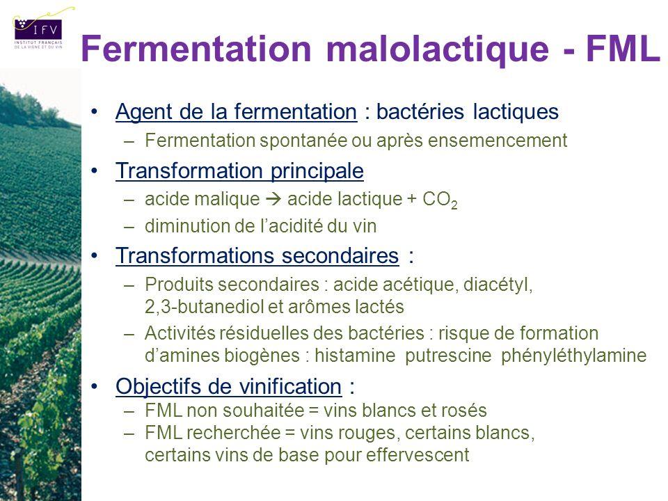 Fermentation malolactique - FML