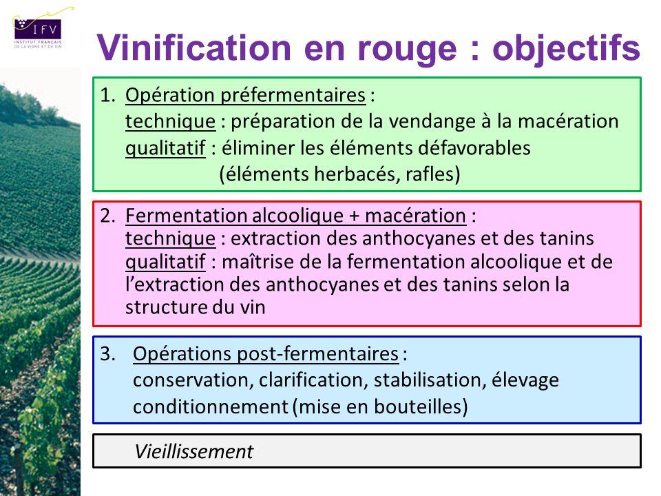 Vinification en rouge : objectifs