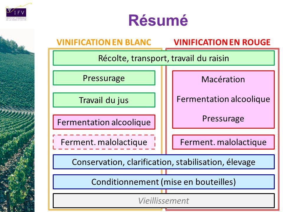 Résumé VINIFICATION EN BLANC VINIFICATION EN ROUGE
