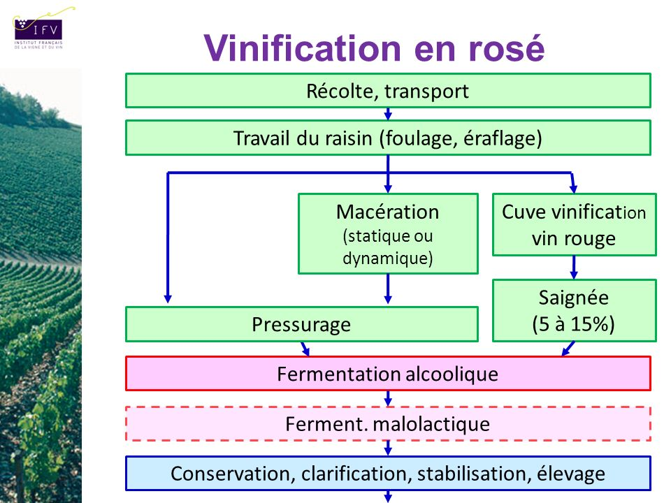 Vinification en rosé Récolte, transport
