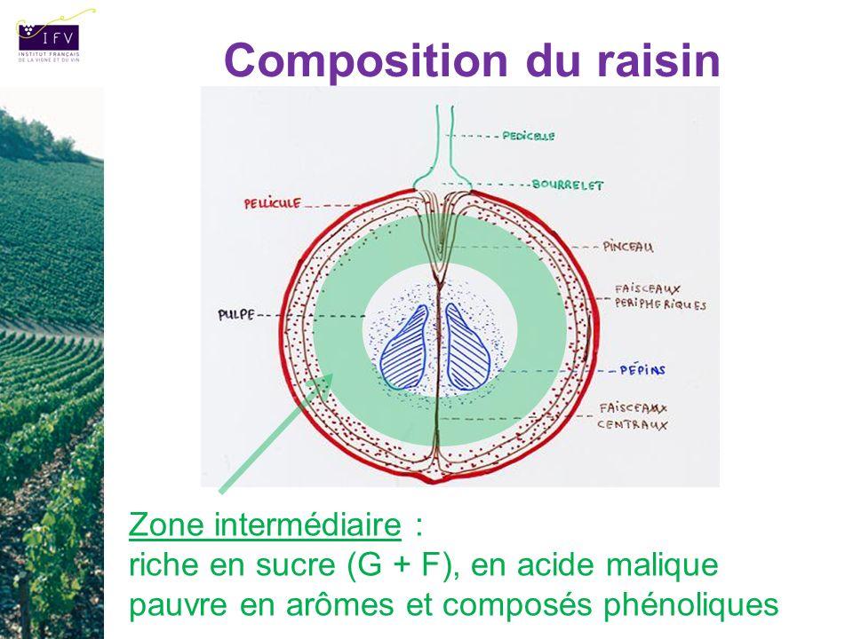 Composition du raisin Zone intermédiaire : riche en sucre (G + F), en acide malique pauvre en arômes et composés phénoliques.