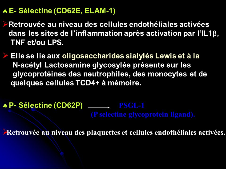E- Sélectine (CD62E, ELAM-1)