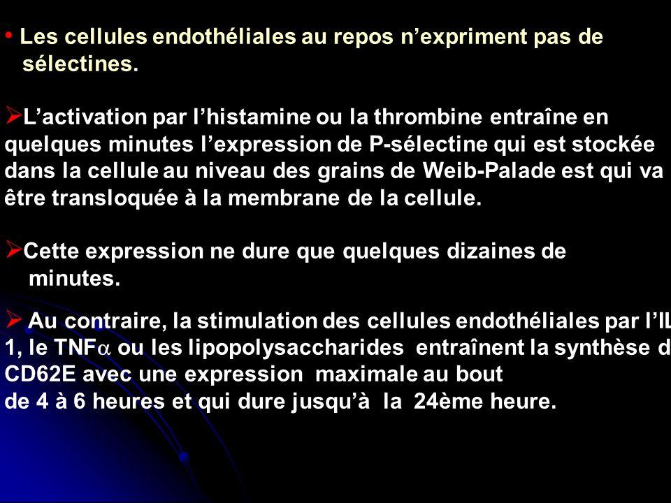 Les cellules endothéliales au repos n'expriment pas de