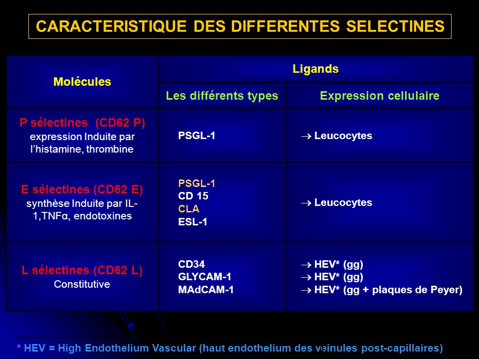 CARACTERISTIQUE DES DIFFERENTES SELECTINES Expression cellulaire
