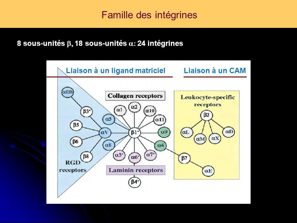 Famille des intégrines