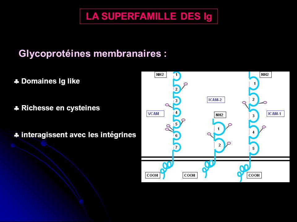 Glycoprotéines membranaires :