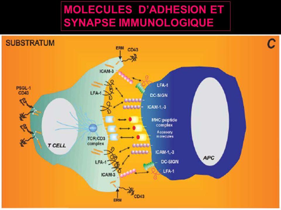 MOLECULES D'ADHESION ET
