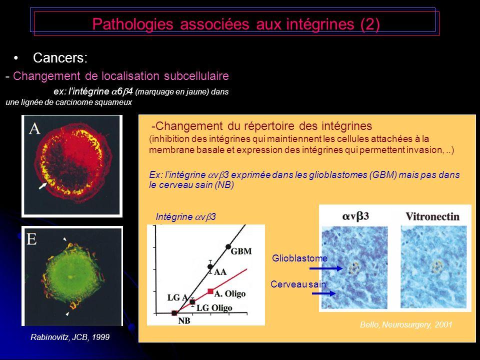 Pathologies associées aux intégrines (2)