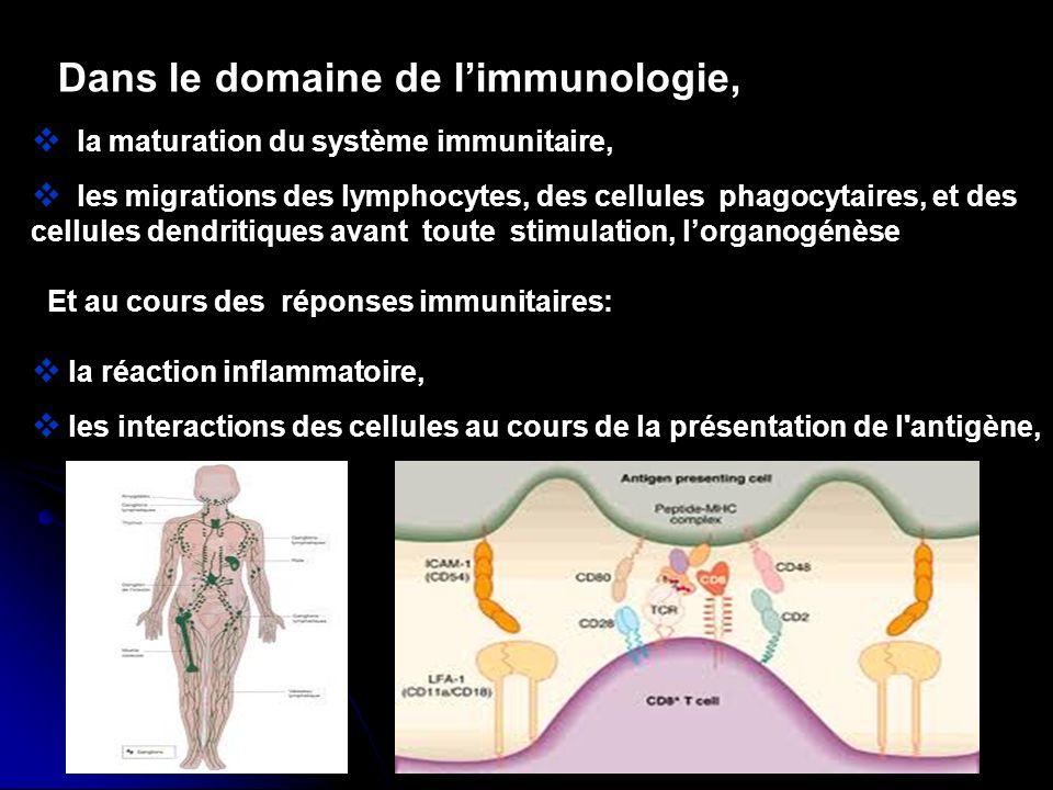 Dans le domaine de l'immunologie,