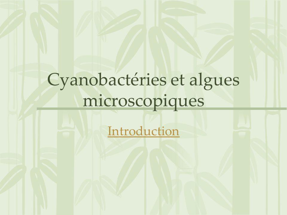Cyanobactéries et algues microscopiques