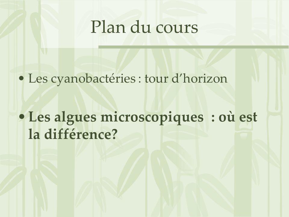 Plan du cours Les algues microscopiques : où est la différence